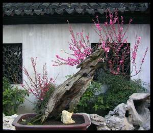 Весна в Шанхае