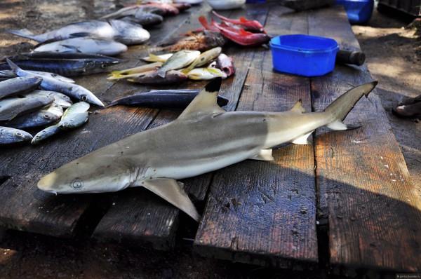 Рыбный рынок в Хиккадуве